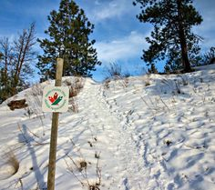 Trail: Mount Conkle Trail Distance: kilometres round-trip Directions: This trail is located in Summerland. Turn west off of H. Natural Park, Round Trip, Trekking, Trail, Hiking, Distance, Adventure, Outdoors, Nature