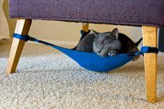 Let the cat kick back in a cat hammock #polyurethane #comfortforlife
