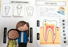 Cahier interactif Les dents Science For Kids, Activities For Kids, Cycle 3, Tooth Fairy, Montessori, Homeschool, Teaching, Education, Blog