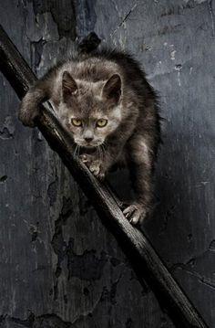 Cat looks like it means business lol