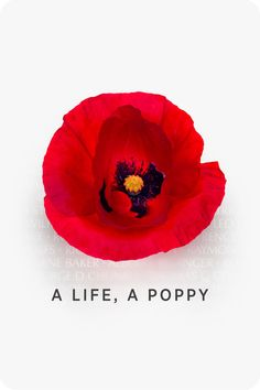 Memorial Day Honoring Those Who Gave Their Lives Memorial Day Poppies, Leo, God Bless America, Veterans Day, Fourth Of July, Flower Art, American Flag, Flower Power, Beautiful Flowers