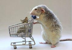 The Life Of Pet Rats   Ellen van Deelen gets creative with her pet rats Moppy and Witje 2013