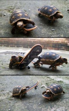 tiny turtles.