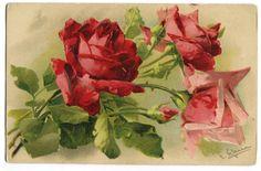 Catharina Klein ( C. Klein) Pocztówki Postcards w MyViMu.com