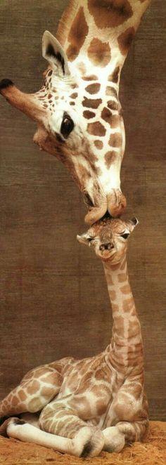 Moderskärlek...