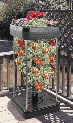 The Upside-down Tomato Garden