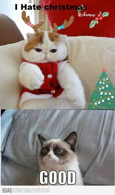 Grumpy Cat is obviously not in the Christmas spirit yet.    Or, maybe never.
