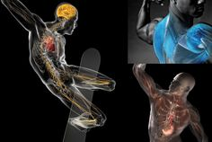 Medical and anatomical graphics by Bryan Christie Design http://www.anatomy-physiotherapy.com/48-art-design/1984-medical-and-anatomical-graphics-by-bryan-christie-design