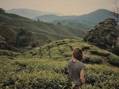 The Complete Guide to Trekking the Cameron Highlands. The Cameron Highlands comprise a trail network of 14 trails surrounding the town of Tanah Rata. Explore tea plantations, waterfalls and jungles in this beautiful environment.