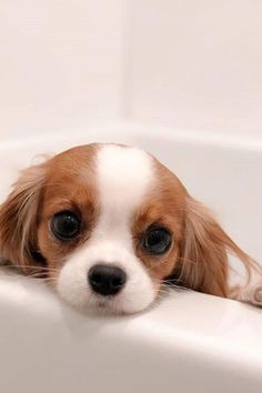 cat recipes monty the cat cats things cat base awesome cats cat and dog Cute Little Puppies, Cute Little Animals, Cute Dogs And Puppies, Cute Funny Animals, Baby Dogs, Doggies, Baby Puppies, Baby Animals Pictures, Cute Animal Photos
