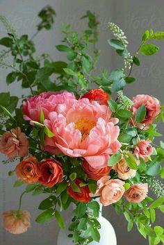 Spring bouquet of ranunculus, peonies and choke cherry sprigs. Spring bouquet of ranunculus, peonies Arte Floral, Deco Floral, Floral Design, Design Art, Fresh Flowers, Spring Flowers, Beautiful Flowers, Spring Bouquet, Vase Of Flowers