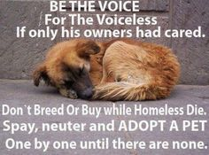 BE THE VOICE FOR THE VOICELESS.  If only his owners had CARED!  PLEASE, PLEASE DON'T BREED OR BUY WHILE THE HOMELESS DIE!  Spay.  Neuter.  Adopt.  Shelter.  Transport.  DONATE!  ~~~        ONE BY ONE UNTIL THERE ARE NONE.     ~~~