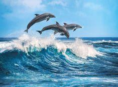 Dolphins, 500 Pieces, Clementoni   Puzzle Warehouse