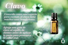 #oils4health Algunas maneras de usar el aceite esencial de clavo. Es muy bueño para sostener el salud del cuerpo. (El photo y consejo viene de la pagina de Facebook de @doterra Internacional Latino America)