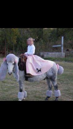 HALLOWEEN HORSES -LAMB #horses