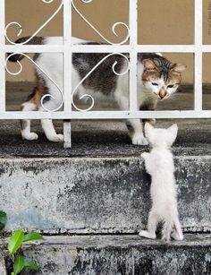 Hi Mom! How'd you get dere?