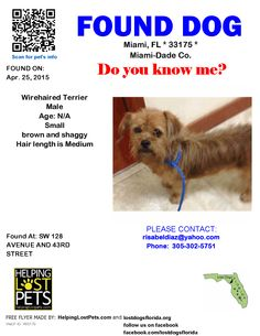 Found Dog - Wirehaired Terrier - Miami, FL, United States