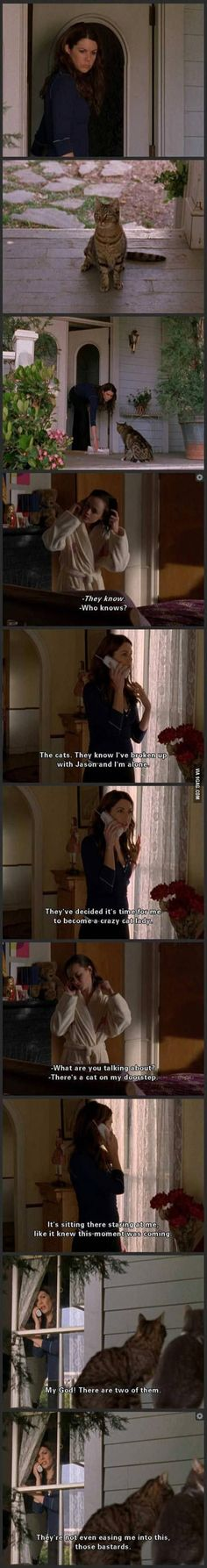 Gilmore Girls ~ Hilarious, so this is how you become a crazy cat lady. Girl Pictures, Best Funny Pictures, Funny Pics, Funny Memes, Animal Pictures, Funny Quotes, Babette Ate Oatmeal, And So It Begins, Lol