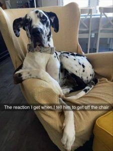 Funny Animal Pictures Of The Day – 22 Pics - Daily Lol Pics
