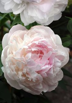 peonies artificial flowers with vase Types Of Flowers, Pretty Flowers, Fresh Flowers, Pink Flowers, Flor Tattoo, Floral Vintage, Peony Painting, Beautiful Flowers Wallpapers, Peonies Garden