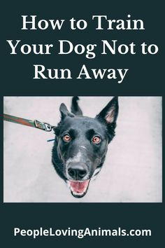 How to Train Your Dog Not to Run Away, How to Stop Your Dog from Running Away, Dog Training