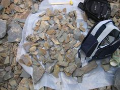Right, sort through this little lot to find Ogyginus Trilobites.