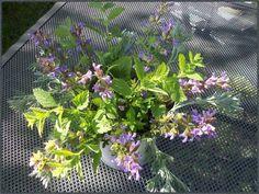 Timeline Photos, Facebook, Flowers, Plants, Sage, Acupuncture, Health, Nature, Flora