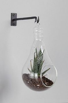 Hanging Light Bulb Glass Terrarium