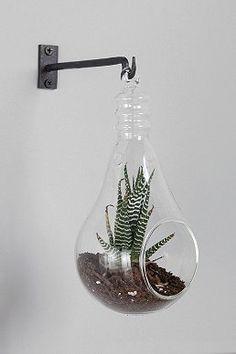 Light Bulb Hanging Terrarium