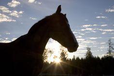 Horses at Equstom Horses, Animals, Photos, Animales, Pictures, Animaux, Animal, Animais, Horse