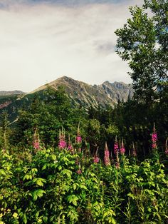 The simple beauty of Polish mountains.