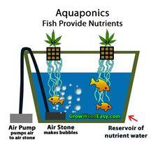soil versus hydroponic