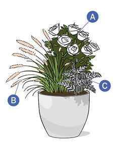 Consider white and silver that glow by the light of the stars. A: Icecap rose. B: 'Hameln' fountain grass. C: Dusty miller. Get the growing details here.