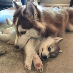 Folly got a new sister this weekend. This pretty much sums up their relationship.https://ift.tt/2u7Xldm