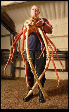 this is the largest crab ever caught and his name is crabzilla. crabzilla is a 10 foot japanese spider crab that was captured in great britain and currently still resides there at the national sea life center in birmingham.