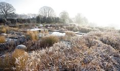 Yorkshire garden | Tom Stuart-Smith. Selection of plants with autumn winter colour and form blend with landscape beyond. Grasses contribute.