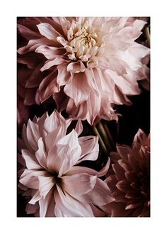 Botanique Botanical posters and paintings. Floral painting and plant posters - Desenio Desenio Posters, Mode Poster, Buy Posters Online, Groups Poster, Deco Floral, Modern Art Prints, Clematis, Flower Wall, Picture Wall