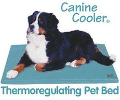 Canine Cooler Therapeutic Dog Bed great way to keep your pet cool. Outdoor Dog Bed, Pets 3, Cool Dog Beds, Dog Pin, Dog Crate, Pet Beds, Pet Supplies, Your Pet, Dog Stuff
