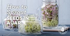 20 Winter Vegetable Garden Projects for January and February - Winter Vegetable Garden Tasks: gardening projects for January and February - Growing Sprouts, Growing Herbs, Growing Vegetables, Sprouting Seeds, Planting Seeds, Sprouting Grains, Fruit Bushes, Fruit Trees, Prune Fruit