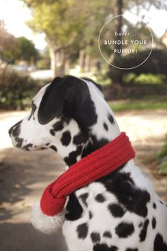 A Pair of Pears: DIY Dog Scarf