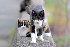 港を出発して20分弱。〝小さな船旅〟を経て桟橋が近づくと、デッキの上から見えたのはニャーニャー鳴いている数匹の子猫の姿。まるで歓迎してくれているかのようで嬉しく…