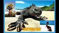 Tortuga Bay-Historia-Islas Galápagos-Ecuador-Producciones Vicari.(Juan F...