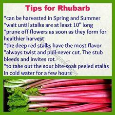 Vegetable garden: tips for rhubarb Growing Plants, Growing Vegetables, Edible Garden, Vegetable Garden, Fruit Garden, Container Gardening, Gardening Tips, Organic Gardening, Missouri