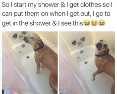 Funny Animal Pictures Of The Day - 25 Pics >>> wish my dogs enjoyed the bathtub. Getting them in for bath takes a box of treats and a forklift. Funny Animal Memes, Dog Memes, Cute Funny Animals, Funny Animal Pictures, Funny Cute, Funny Pictures, Animal Funnies, Dog Funnies, Animal Humour
