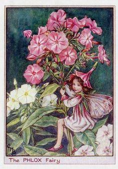 Phlox Flower Fairy Vintage Print c1950 Cicely by TheOldMapShop