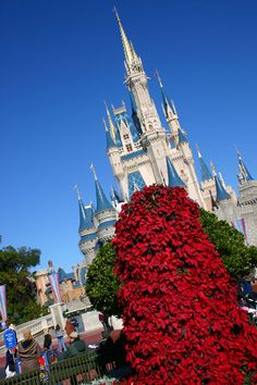 170 poinsettias are used to create each big red Christmas trees at WDW