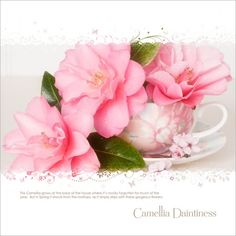 says camellias, could be Nana's roses.