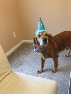 My birthday boy! (Cross posted on r/goldenretrievers) http://ift.tt/2rdV8tO