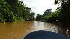 Kinabatangan River, Borneo