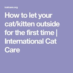 How to let your cat/kitten outside for the first time | International Cat Care